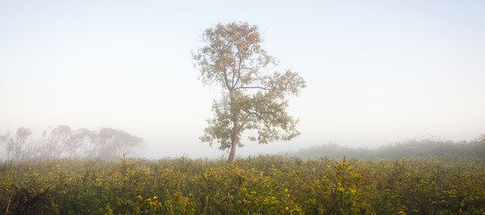 Scenic view of field during foggy weather Wall mural