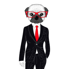 Vector brutal french bulldog in elegant classic suit. Hand drawn