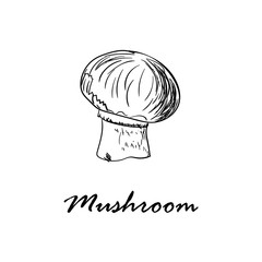 Hand drawn vector illustration of mushroom isolated on white
