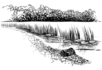 Bank of the river with reed and cattail. Sketchy style.