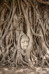 Amazing Buddha Head in tree roots at Mahatat Temple, Ayuttaya, Thailand