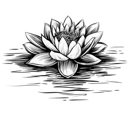 Water lily, hand drawn vector. Lotus illustration.