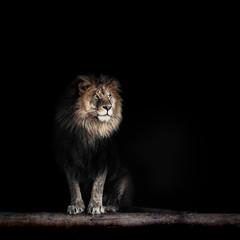 Foto auf Leinwand Löwe Portrait of a Beautiful lion, lion in dark