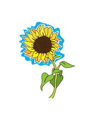 Sunflower on stem with leaves and blue background