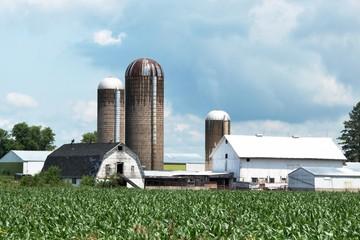 Farm After Rain