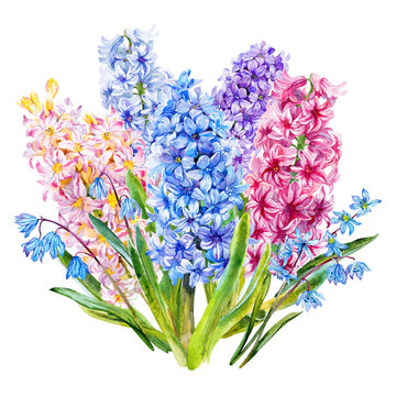Bouquet with hyacinth and Scilla. Watercolor.