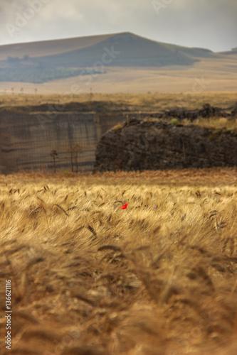 italian landscape with ox - photo #40