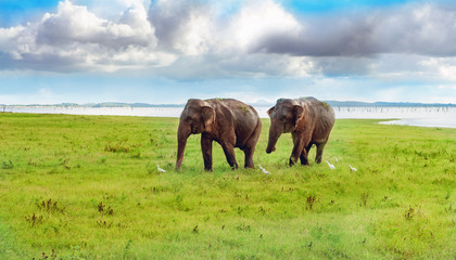 Panorama view with two elephants