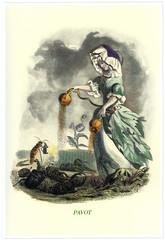 Illustration / Les fleurs animées de Grandville / Pavot