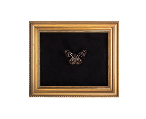 Vintage golden frame with butterfly isolated on white background