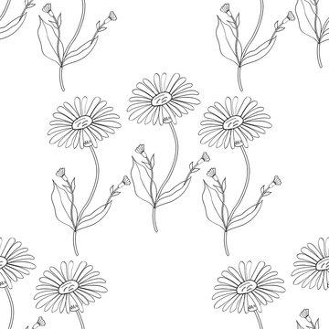 Arnica. Vintage medicinal herb sketch. Botanical plant illustration, seamless pattern