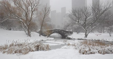 Fototapete - New York City Central Park snowing in winter