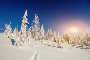 Fantastic winter landscape in the mountains of Ukraine