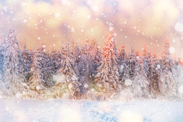 magical winter snow covered tree, background with some soft high