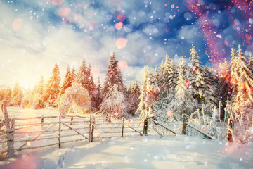 winter landscape trees and fence in hoarfrost, background with s