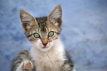 gato pequeño cría 0088-f17