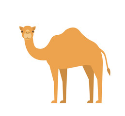 cartoon camel in flat style on white background