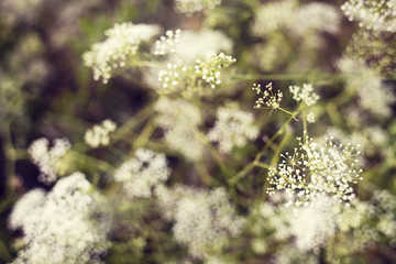 Summer flowers, summer background, summer texture