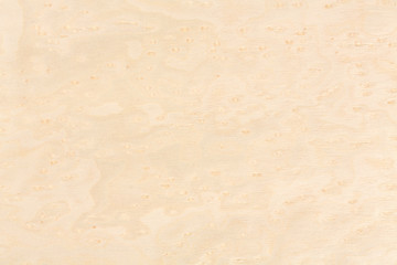 Bright natural maple wood design texture. Natural background clo