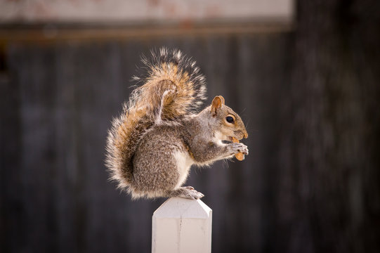 Squirrel on post.