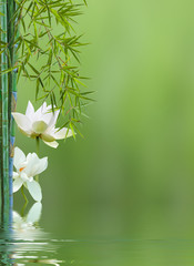 fleurs de lotus et bambous