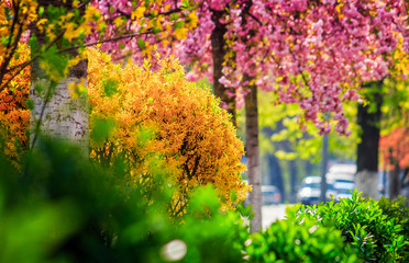 city street blossom in spring