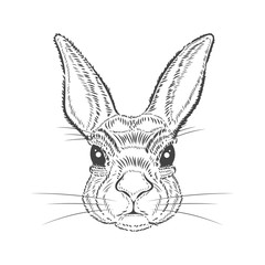 Vintage graphic Rabbit Vector Print