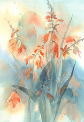 Crocosmia orange flower watercolor