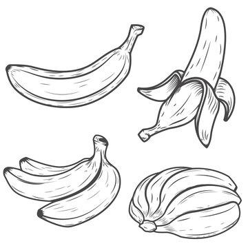Set of banana icons isolated on white background. Design element