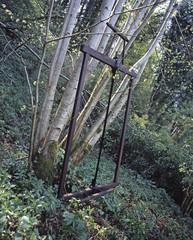 Outils du bois / Scie / Forestier