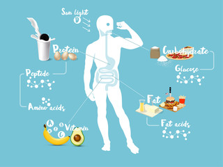beautiful info graphic design concept vector of digestive system and absorption system of human