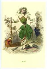Illustration / Les fleurs animées de Grandville / Vigne