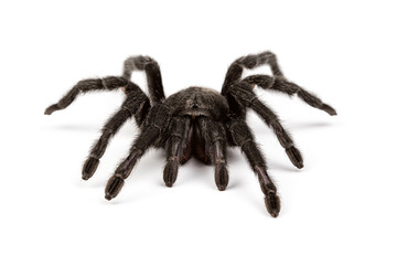 Isolated photo of spider's pelt