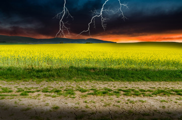 rape field in the storm