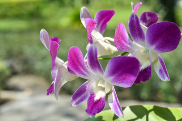 Beautiful purple orchid in garden