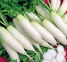 White daikon radishes