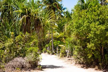 Тропинка среди тропического леса, остров Занзибар.