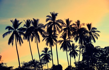 Tropical view of silhouetted palm trees at sunset