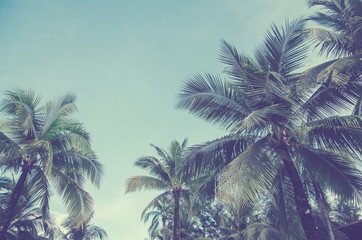 coconut tree on blue sky , summer concept , vintage and background
