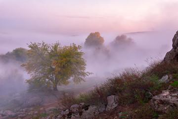 Landscape with autumn fog