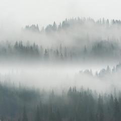Beautiful Fog in Forest