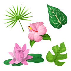 Tropical Flowers and Leaves for Decoration. Vector illustration