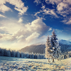 magical winter snow covered tree in the Carpathians. Ukraine, Eu