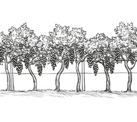 Hand drawn vector illustration of vineyard.