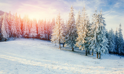 Fantastic winter landscape in the mountains. Magical sunset in a