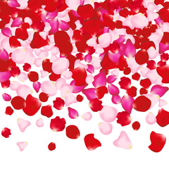 Red and pink rose petals isolated on white. Valentine background. Beauty fashion woman concept