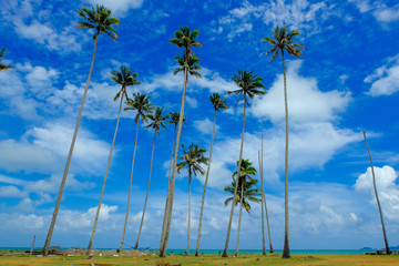 beautiful seascape with coconut tree at sunny day with cloudy blue sky background
