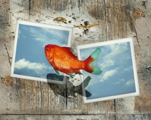 A jump between two photos polaroid