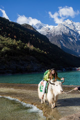 Woman riding on yark and Blue moon valley in lijiang city ,China.It  at the foot of Jade Dragon Snow Mountain.
