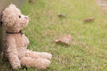Teddy bear,Teddy bear seat in the garden with sunshine.